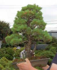 JapanImport18_441.JPG